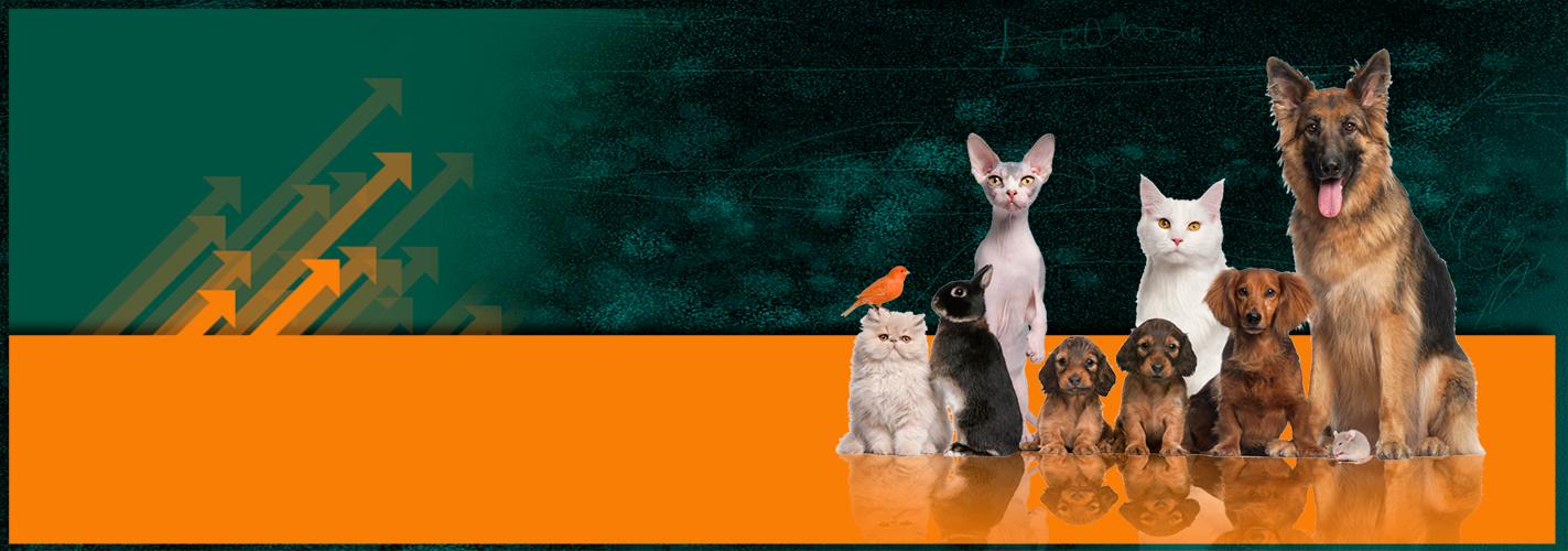 Mascotas-News-WEB